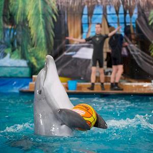 Дельфинарии, океанариумы Малаховки