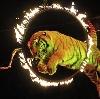 Цирки в Малаховке