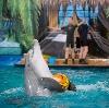 Дельфинарии, океанариумы в Малаховке